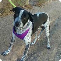 Adopt A Pet :: Teela - Mesa, AZ