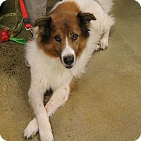 Collie Mix Dog for adoption in Kennesaw, Georgia - Buddy Boy