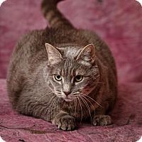 Adopt A Pet :: Joy - Harrisonburg, VA