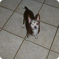 Adopt A Pet :: Pirate Pete - Wyanet, IL