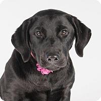 Adopt A Pet :: Cristina - St. Louis Park, MN