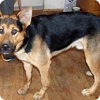 Adopt A Pet :: BUSTER - Corona, CA