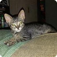 Adopt A Pet :: Schooner - Rocklin, CA