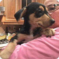 Adopt A Pet :: Conner (Fostered in TN) - Brighton, TN