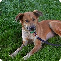 Adopt A Pet :: SABINA - Phoenix, AZ