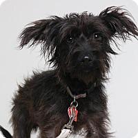 Adopt A Pet :: Oliver  D161984 - Edina, MN