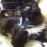 Adopt A Pet :: RASCAL - Brea, CA