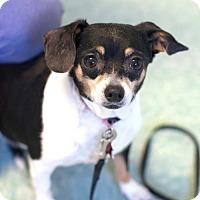 Adopt A Pet :: Wilma - Bellbrook, OH