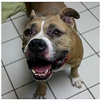 Adopt A Pet :: Puca - Forked River, NJ