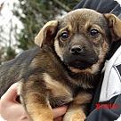 Adopt A Pet :: Remy (4 lb) Video!