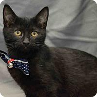Adopt A Pet :: Carl - St. Cloud, FL