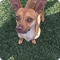 Adopt A Pet :: Rudy - Chula Vista, CA