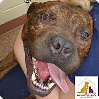 Adopt A Pet :: Auggie - Eighty Four, PA