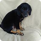 Adopt A Pet :: Spencer-pending adoption