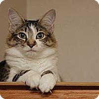 Adopt A Pet :: Molly - Dallas, TX