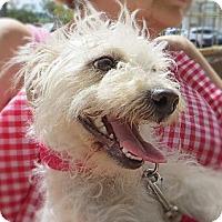 Adopt A Pet :: Snowy - Long Beach, CA