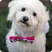 Adopt A Pet :: Skye - Atascadero, CA
