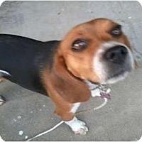 Adopt A Pet :: Rosie-PENDING - Indianapolis, IN
