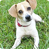 Adopt A Pet :: Desi - Mocksville, NC