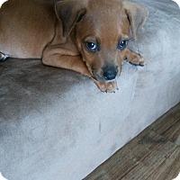 Adopt A Pet :: Waffles - Muskegon, MI