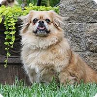 Adopt A Pet :: Tucker - Virginia Beach, VA