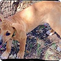 Adopt A Pet :: Buster - Johnson City, TX