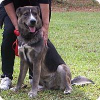 Adopt A Pet :: Spike - Little River, SC