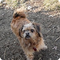 Adopt A Pet :: Teddy - mooresville, IN