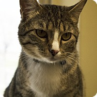 Adopt A Pet :: Laney - Fremont, NE