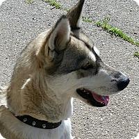 Adopt A Pet :: KITA - Gustine, CA