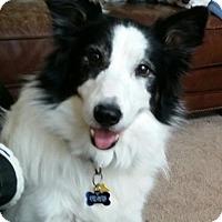 Adopt A Pet :: Finleigh - Evansville, IN