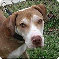 Adopt A Pet :: Dash - Kingwood, TX