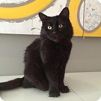 Adopt A Pet :: Char - Toronto, ON