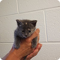 Adopt A Pet :: Charlotte - Shelby, MI
