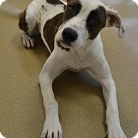 Adopt A Pet :: Ms.Klaus - Miami, FL