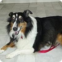 Adopt A Pet :: Mia - Maryland Heights, MO