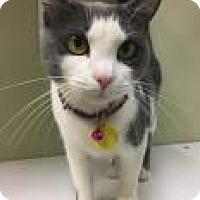 Adopt A Pet :: Jonie 4427 - Columbus, GA