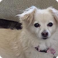 Adopt A Pet :: Lizzie - San Juan Capistrano, CA