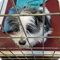 Terrier (Unknown Type, Medium) Mix Dog for adoption in Colfax, Illinois - Ski