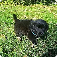 Adopt A Pet :: Aspen - Columbus, OH