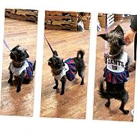 Adopt A Pet :: Zoe - Tenafly, NJ