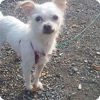 Adopt A Pet :: Frankie - oxford, NJ