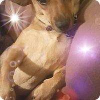 Adopt A Pet :: Calista - Wellington, FL