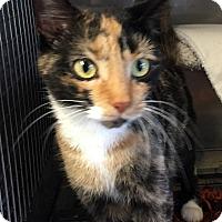 Adopt A Pet :: Olivia - Loogootee, IN