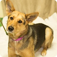 Shepherd (Unknown Type) Mix Dog for adoption in South Haven, Michigan - Lady