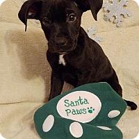 Adopt A Pet :: Tucker (James MD-DE) - Newark, DE