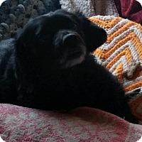 Adopt A Pet :: Buddy - Battle Ground, WA