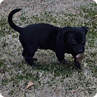 Adopt A Pet :: Schultz - Orangeburg, SC