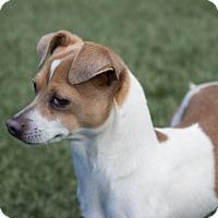 Adopt A Pet :: Mavis - Chula Vista, CA