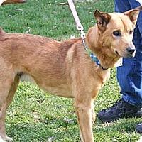 Adopt A Pet :: Bacon - Toledo, OH